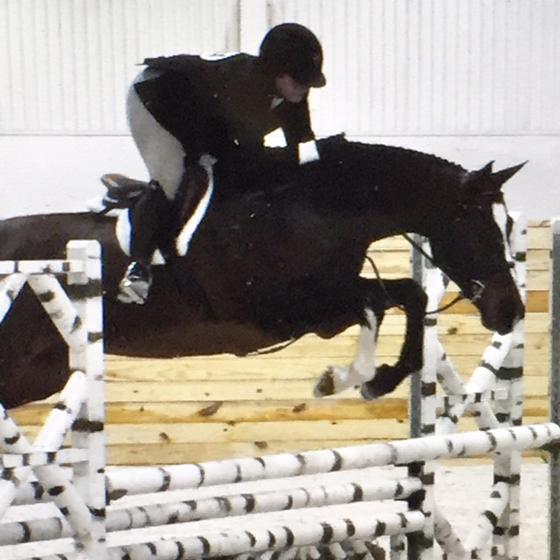 Contessa - Sale Horse